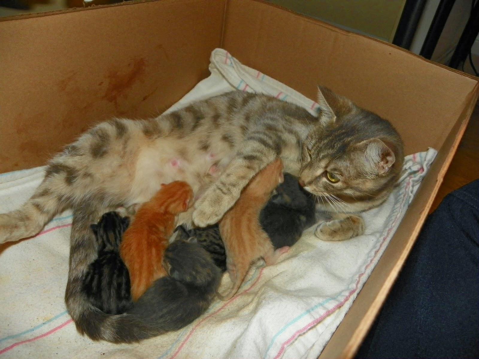 К чему беременной снится родить котёнка
