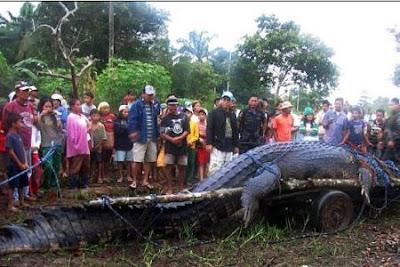 菲巨鱷 落龍 第一巨鱷「落龍」