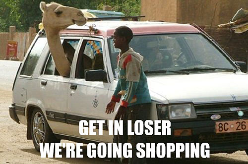 Funny Camel Names Funny Camel Inside Car