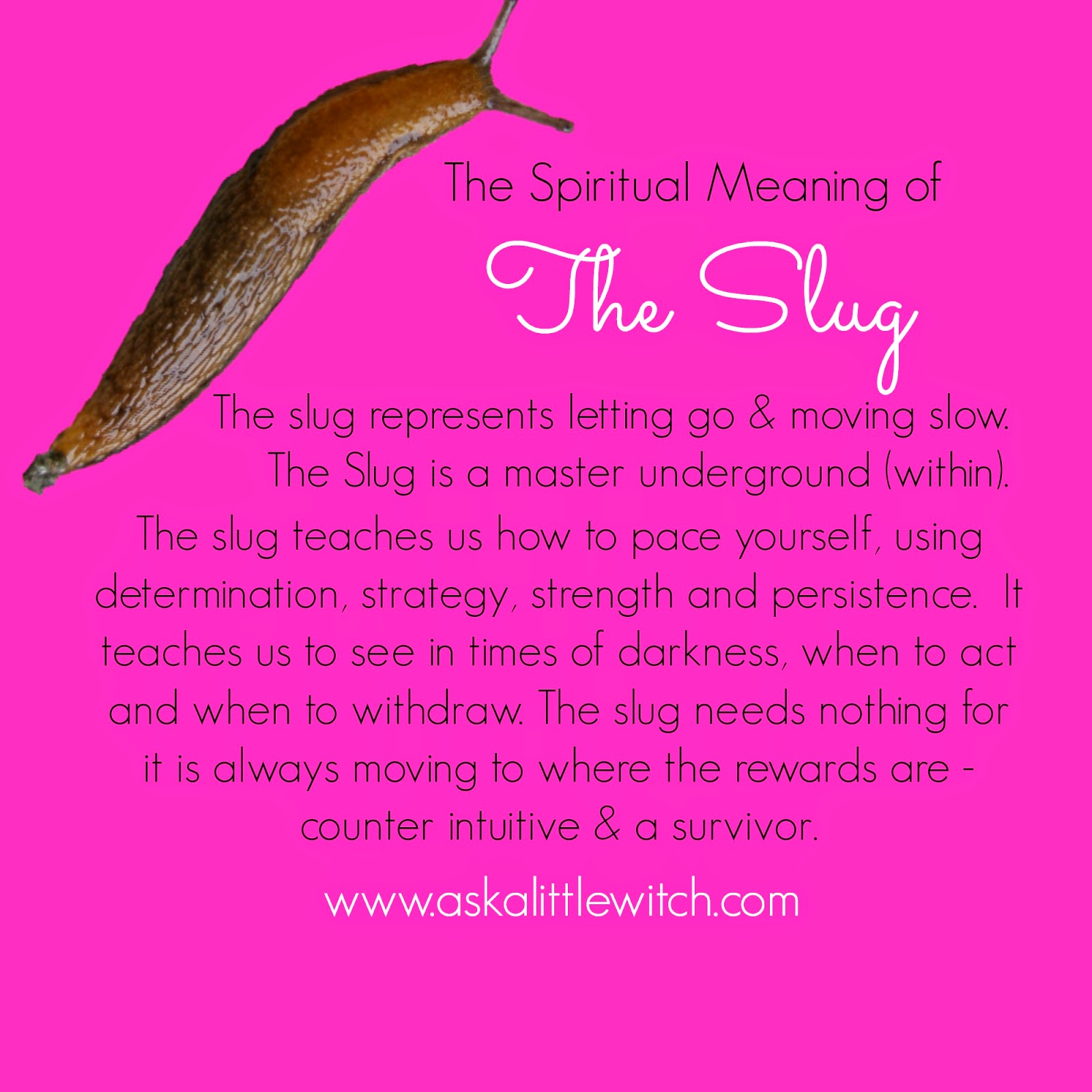 The Little Witches Blog Symbolism Of Slugs