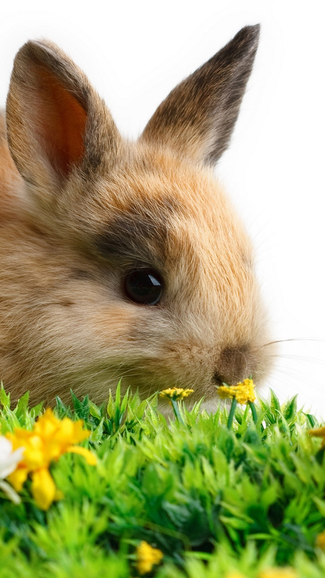 Cute Easter Wallpaper Cute easter bunny free iphone