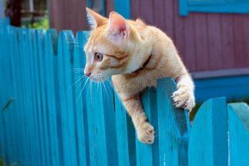 agar kucing tidak buang kotoran di halaman rumah anda