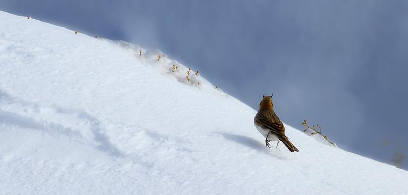 doğa ve kuş fotoğrafçılığı