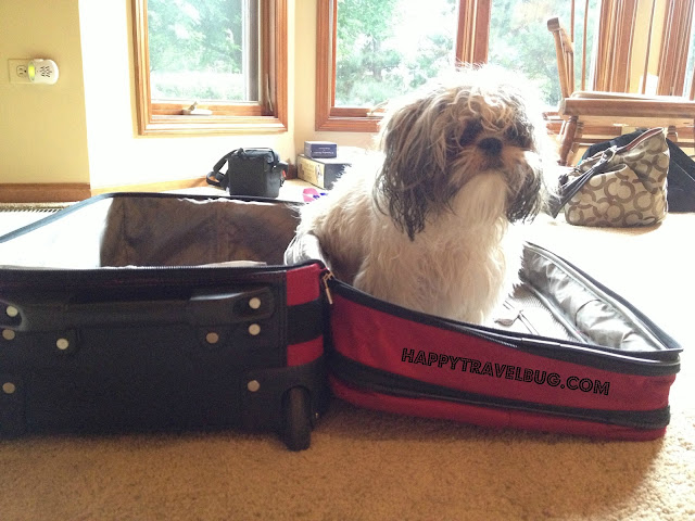My shih tzu puppy in my suitcase