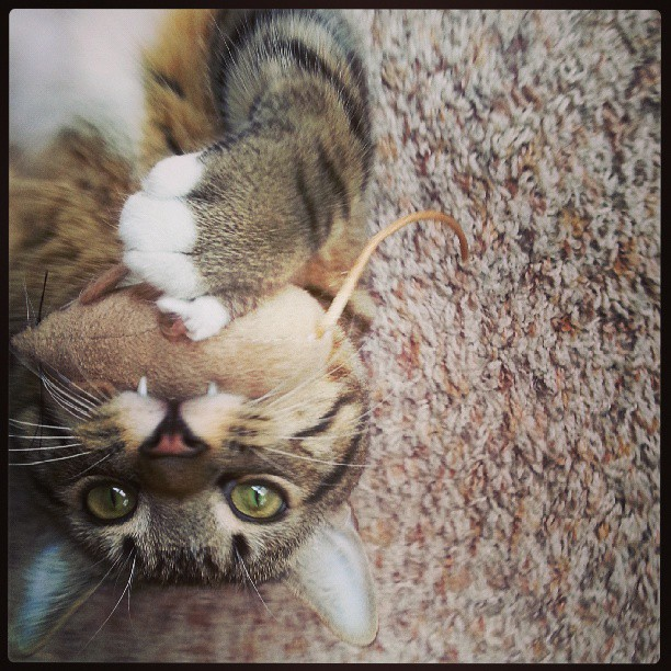 Сумасшедшие коты, фото 27