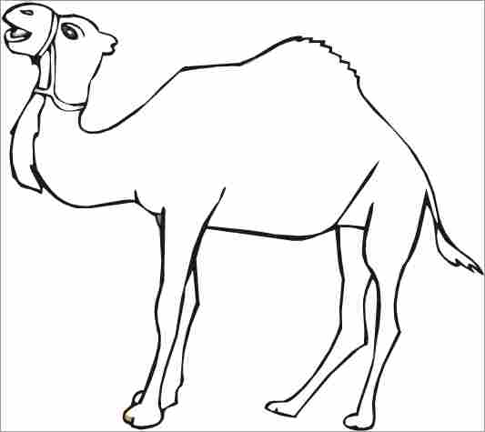Camel Coloring Sheet Education For Free Camel Coloring Pages