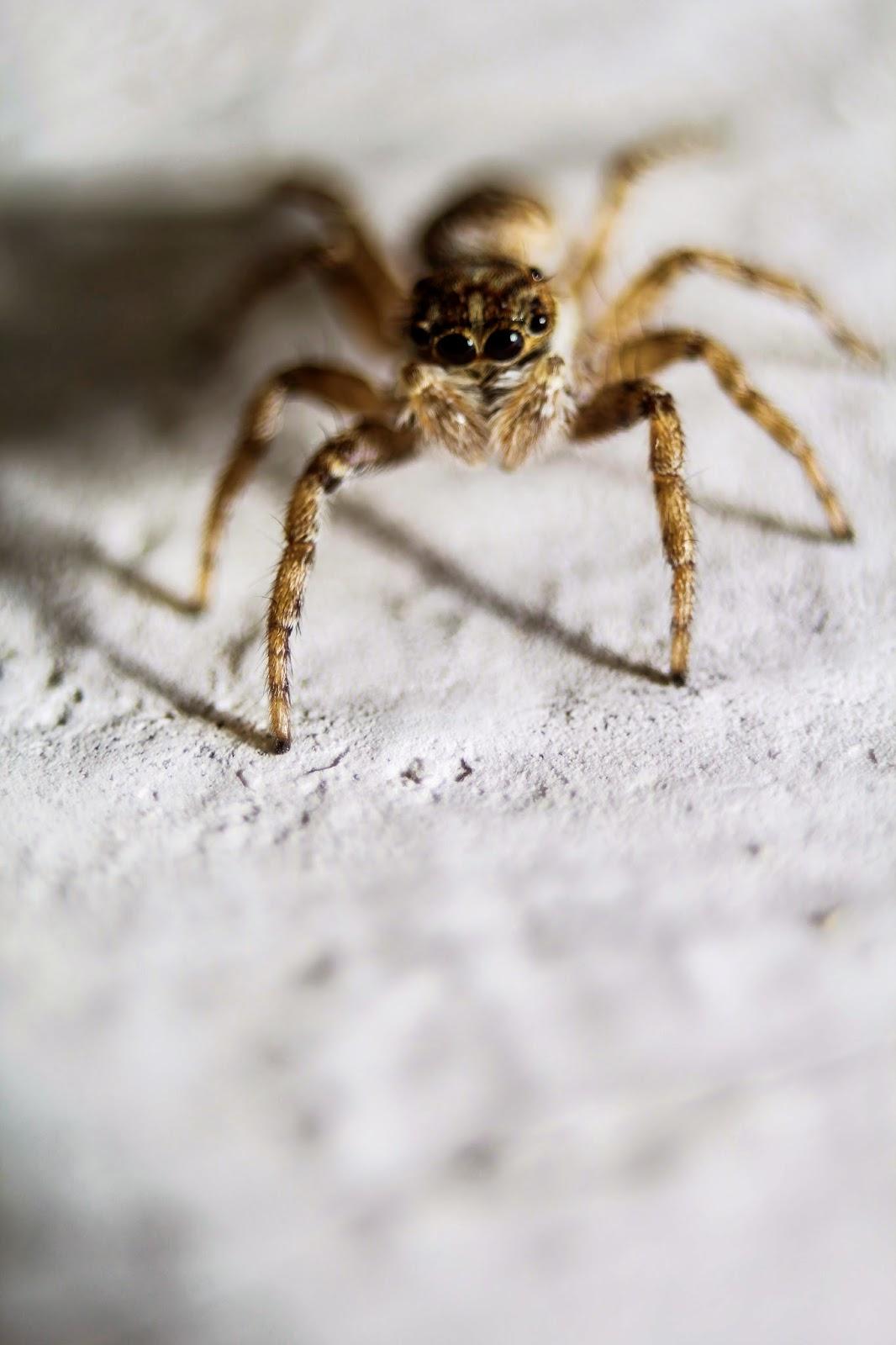 Arañas en fotosmacro.blogspot.com
