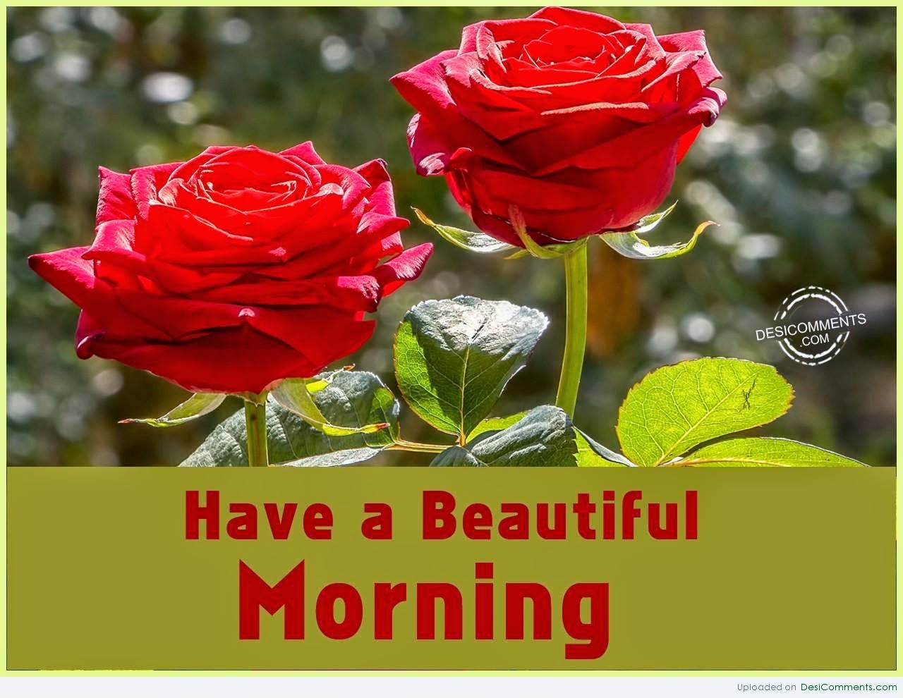Love Flower Wishes Good Morning Wallpaper With Message