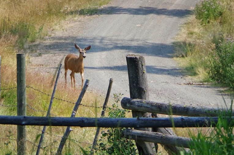 Deer running down road - From BTBU blog
