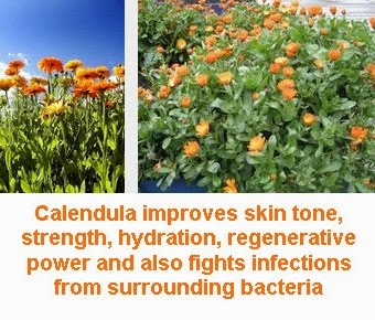 calendula officinalis benefits skin