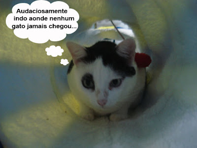 Gata Malu brincando no interior do túnel divertido para gatos