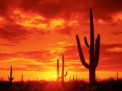 desierto-arizona