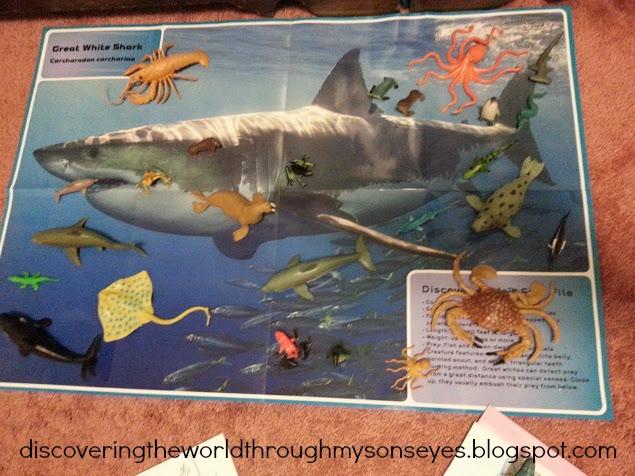 Pares Memo juego de puzzle océano animales y peces de  - imagenes de animales del oceano