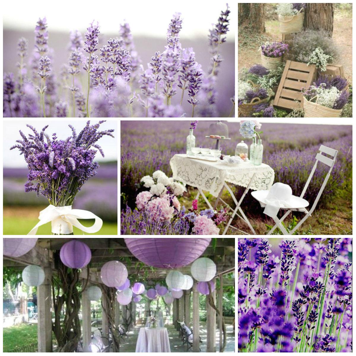 Todo con las flores decorar crear degustar cuidar for Jardines de lavanda