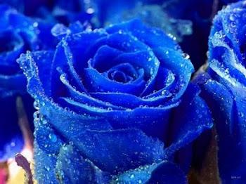 Rosa de Petalos azules