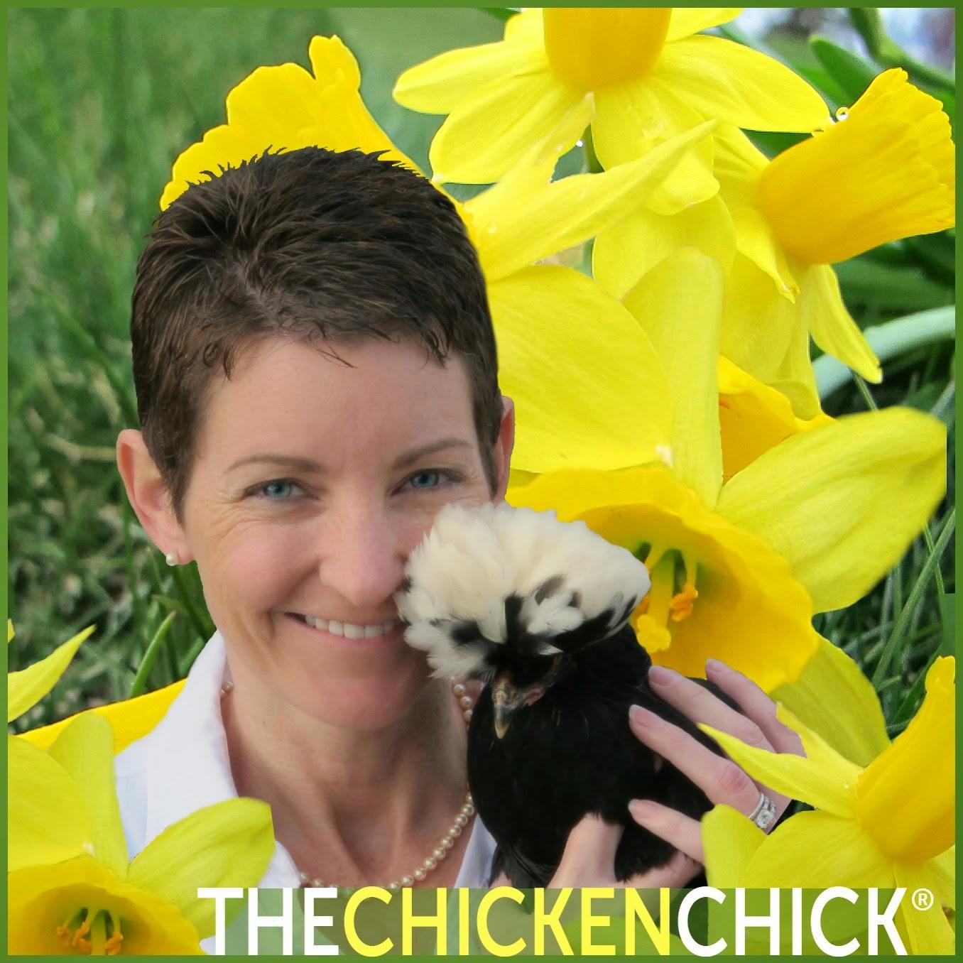 the chicken causes of lash eggs u0026 salpingitis by annika