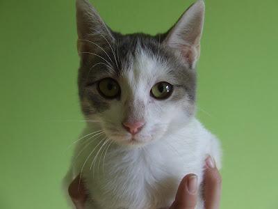 Adoptii pisici - Izzie