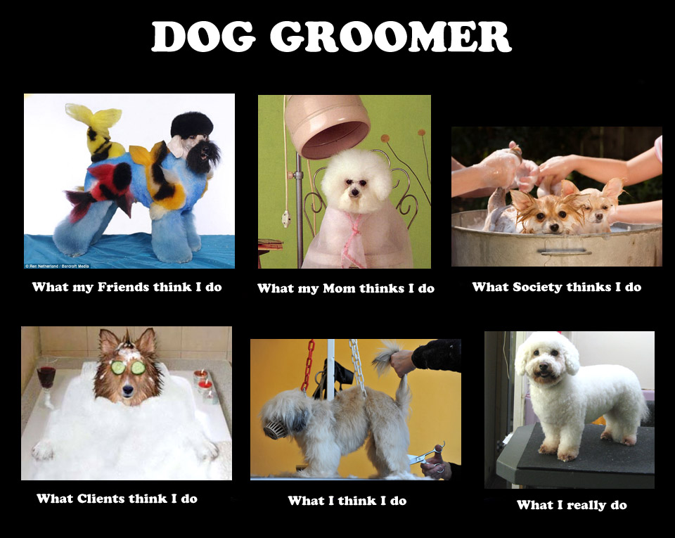 how to become a groomer