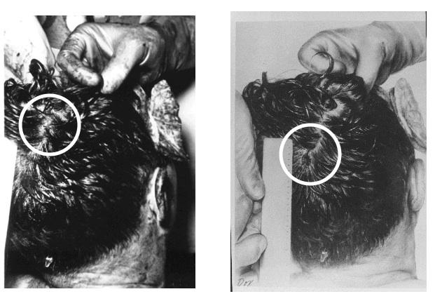 HSCA+photo+and+diagram.jpg