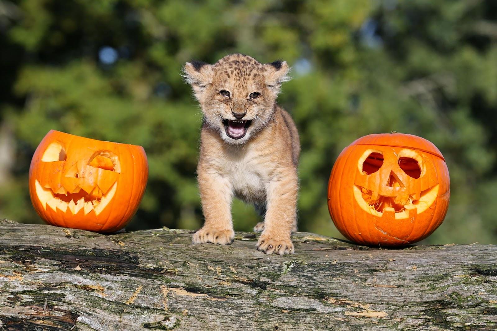 Funny halloween animals 27