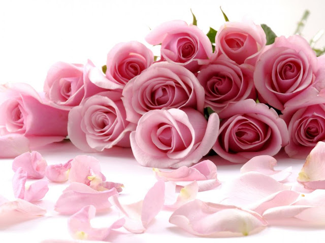 Beautiful Pink Roses Flowers Collections 26