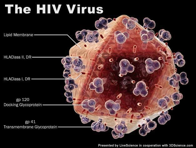 Virus Mematikan HIV