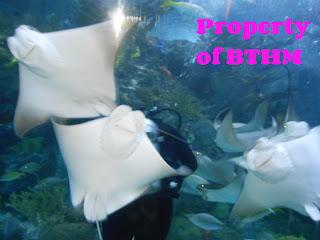aquarium stingrays
