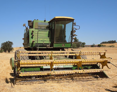 Machine Harvesting Wheat at Jack Creek Farms, © B. Radisavljevic