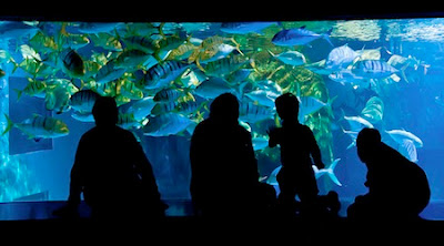 Sea Life Aquarium View