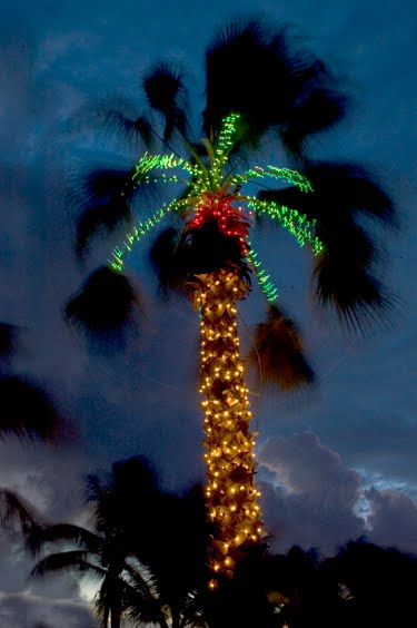 were following - Christmas Palm Trees