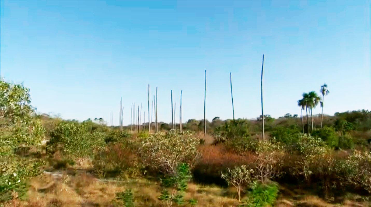 A presença da palmeira indica a existência de água, formando um oásis no meio do sertão. Veja mais sobre a extinção das Veredas na matéria Natureza da Globo em 19-10-2014 AQUI