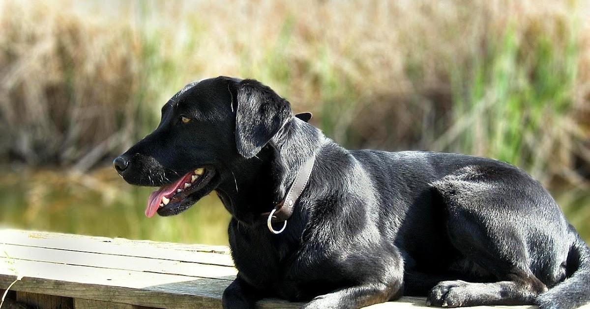photo de chien a vendre pas cher. Black Bedroom Furniture Sets. Home Design Ideas