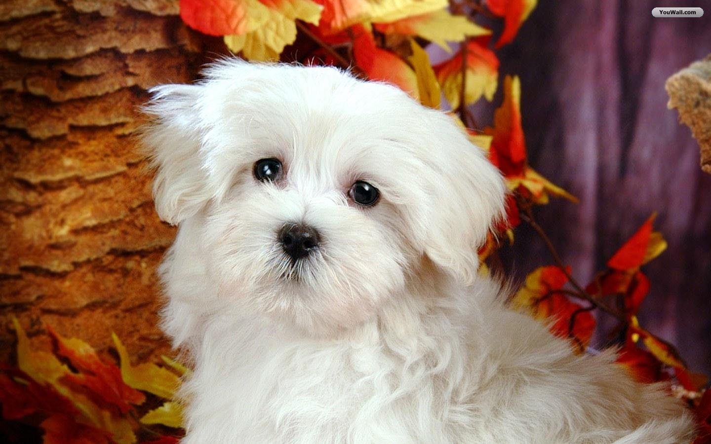 Funny Animals: Cute White Dogs