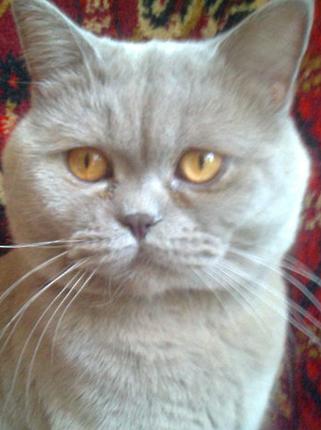 Найденный котенок