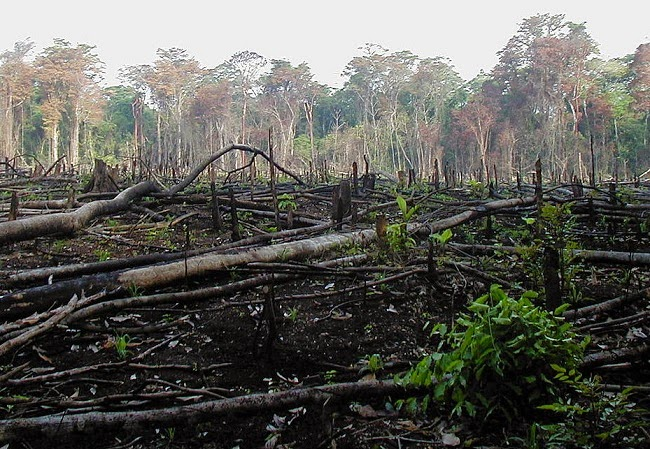 Tropical forest burned and cleared for agriculture in southern Mexico. (Credit: Jami Dwyer via Wikimedia) Click to Enlarge.