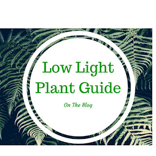 Beyond The Philodendron Your Guide To Indoor Greenery