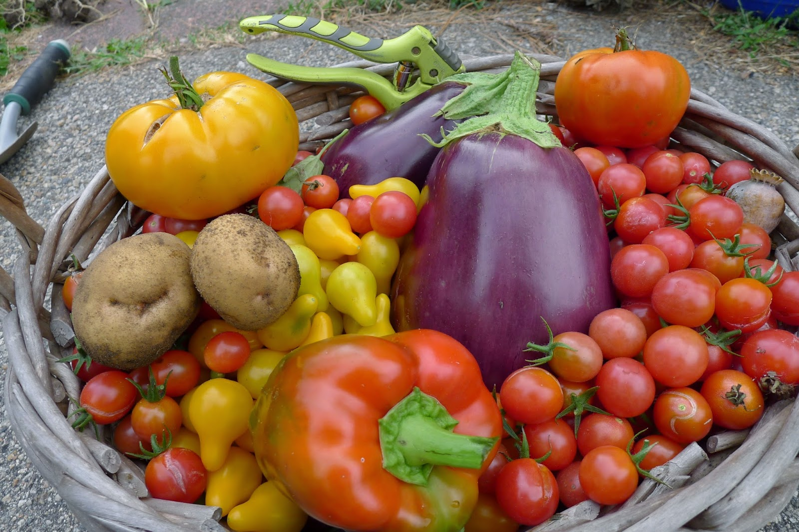 Home grown food, urban farming, gardening