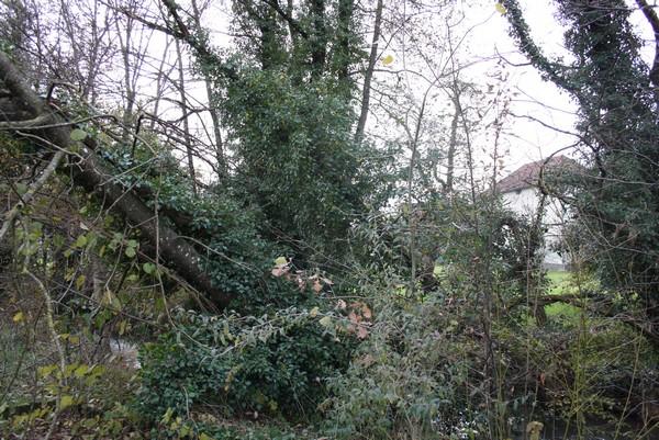 Suite des probl mes le blog de mon doubs jardin for Le jardin qui bascule 1975