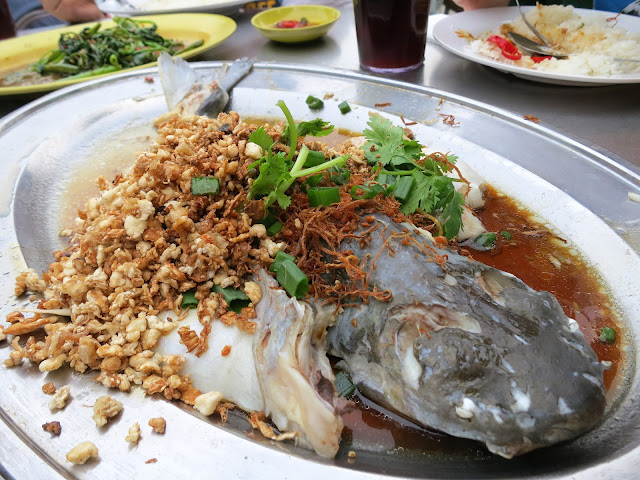 Steamed Patin Fish