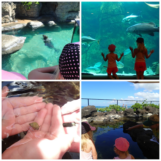 aquarium - My top 6 things to do with kids in Hawaii