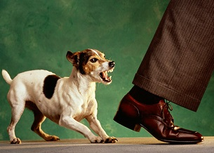 Cắn người. Bất kỳ con chó có thể cắn nếu chúng cảm thấy bị đe dọa hay lo lắng. Nhưng hãy dạy chúng cảm thấy thoải mái khi ở xung quanh mọi người và tin tưởng con người. Hãy đặc biệt cẩn thận khi chúng ở xung quanh trẻ em và thực phẩm...