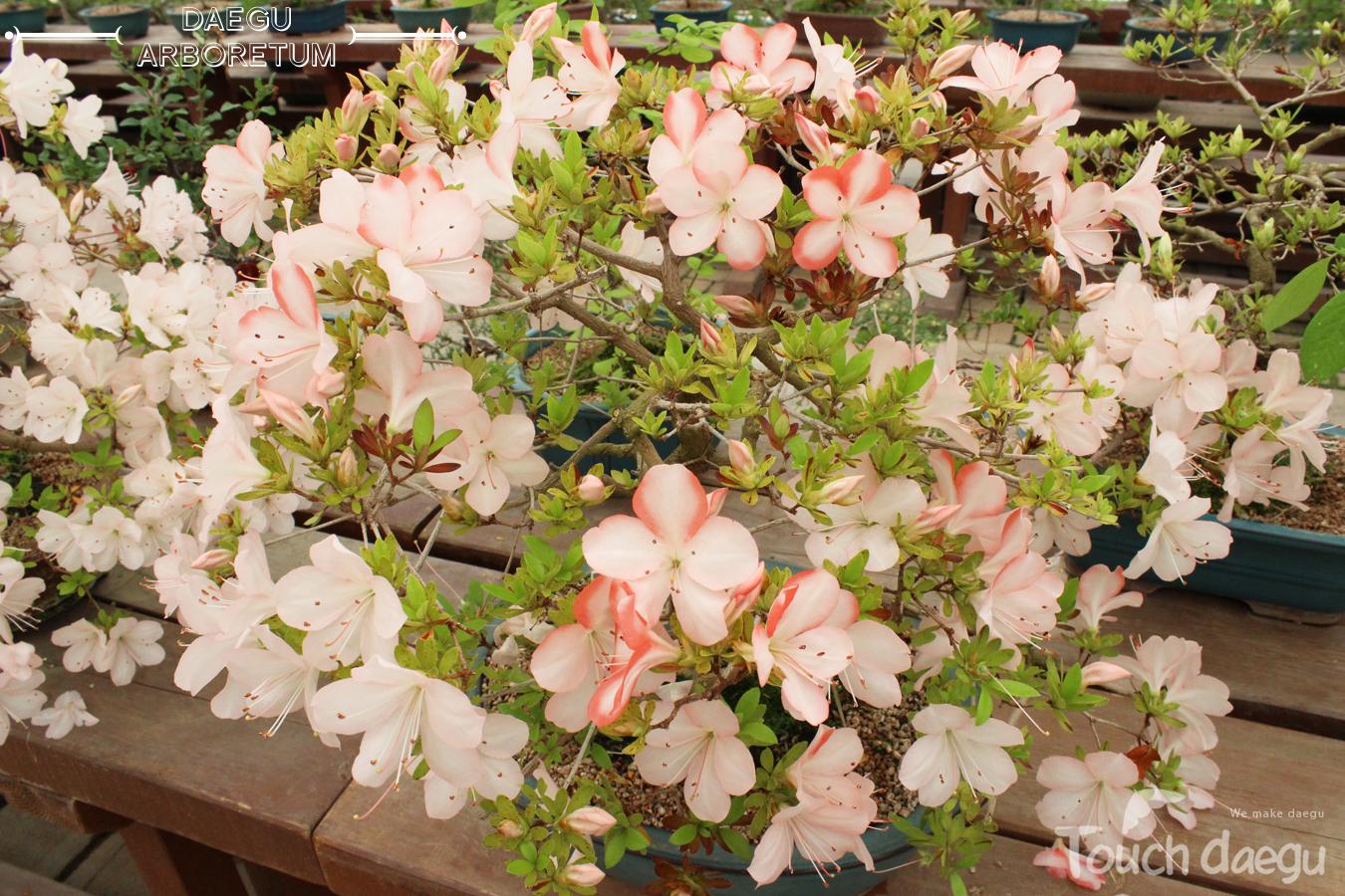 Adorable flowers in the green house of Daegu Arboretum