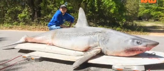 Big fishes of the world mako shark page 2 for Shark fishing destin fl