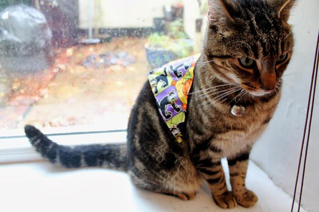 halloween cat bandana