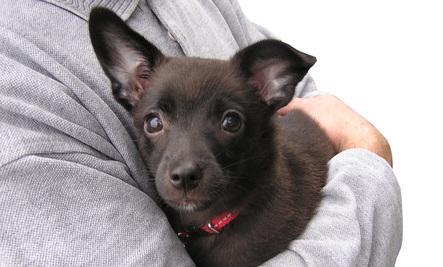 Tips for Pet Parenting After a Divorce  - black small dog