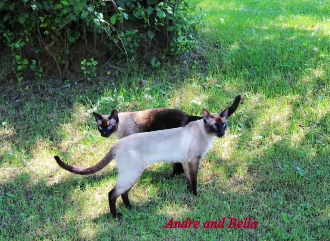 Bella and Andre 2013