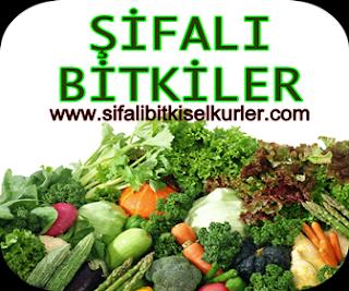 Sşifalı Bitkiler, Şifalı Otlar,Şifalı bitkisel Kürler,Bitkisel Tedavi Yöntemleri