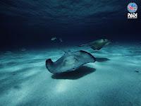 Aquarius dive center Constanta Romania PADI open water diver Referral course