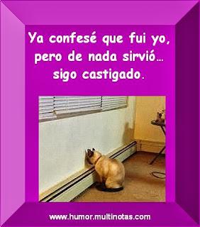 Imagenes Graciosas de Animales, Gato Castigado