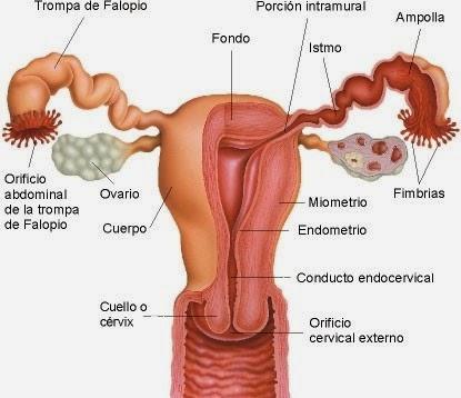 Ciencia & Salud: octubre 2013